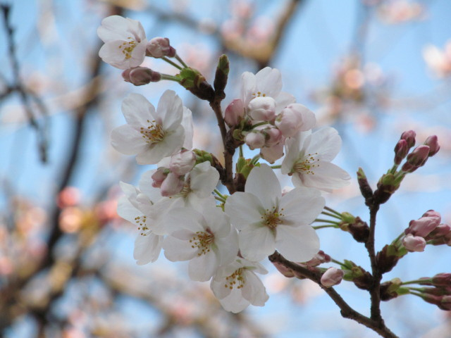 春がきたっ!!_d0140234_20455516.jpg