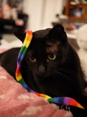 ハリケーンしましま黒猫 のぇる編。_a0143140_2333325.jpg