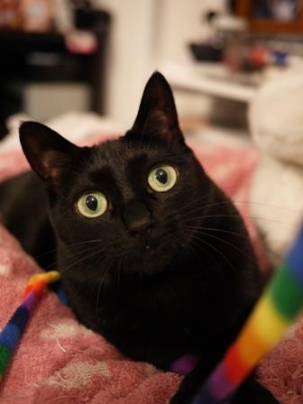 ハリケーンしましま黒猫 のぇる編。_a0143140_23355419.jpg