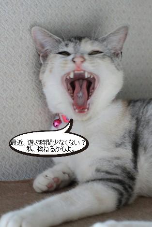 今日の保護猫さんたち_e0151545_2153768.jpg