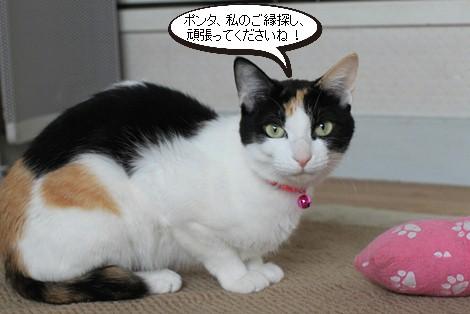 今日の保護猫さんたち_e0151545_2158423.jpg