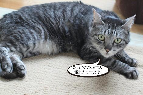 今日の保護猫さんたち_e0151545_221540.jpg