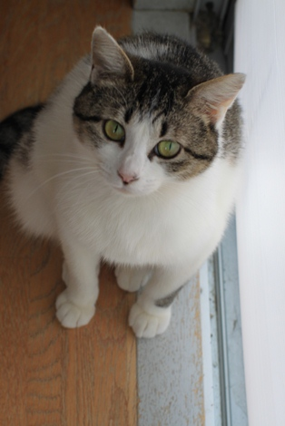 今日の保護猫さんたち_e0151545_2219281.jpg