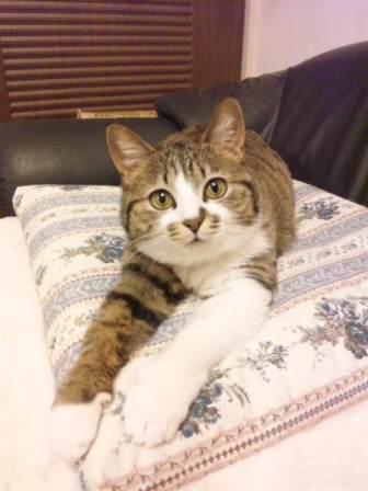 今日の保護猫さんたち_e0151545_2232231.jpg