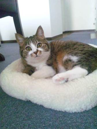 今日の保護猫さんたち_e0151545_2242081.jpg
