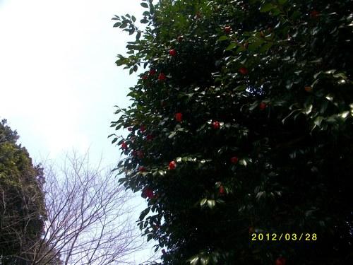 b0150946_1848242.jpg