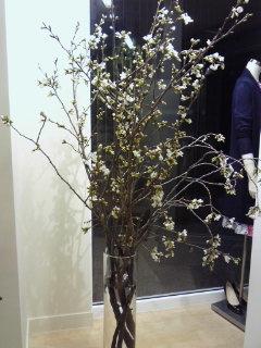 桜。。。_a0229658_1550220.jpg