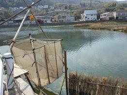 シロウオ漁、間もなく最盛期_e0175370_1231654.jpg