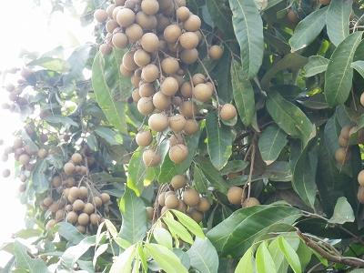 2012 タイへ・・・⑬_d0144077_0384577.jpg