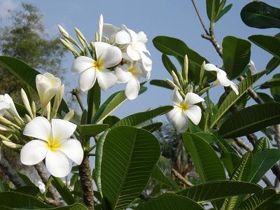 2012 タイへ・・・⑬_d0144077_0391560.jpg