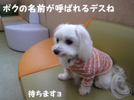 b0193480_15171573.jpg