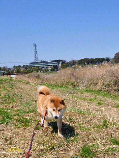 春の小川でかぼちゃんとふたり_a0126590_64529100.jpg