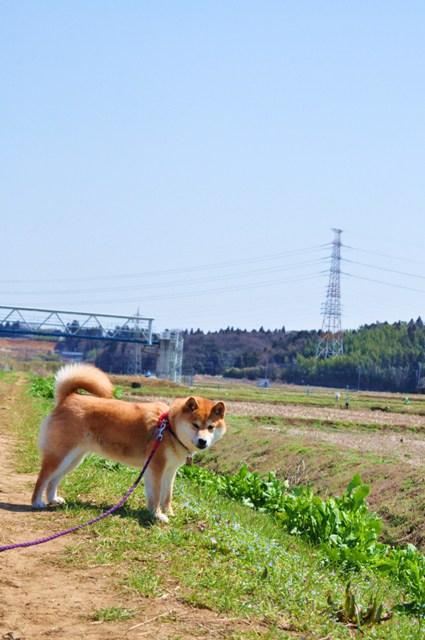 春の小川でかぼちゃんとふたり_a0126590_6495698.jpg
