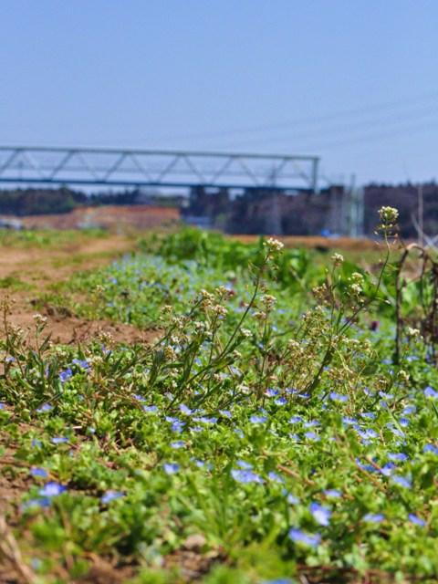 春の小川でかぼちゃんとふたり_a0126590_6555367.jpg