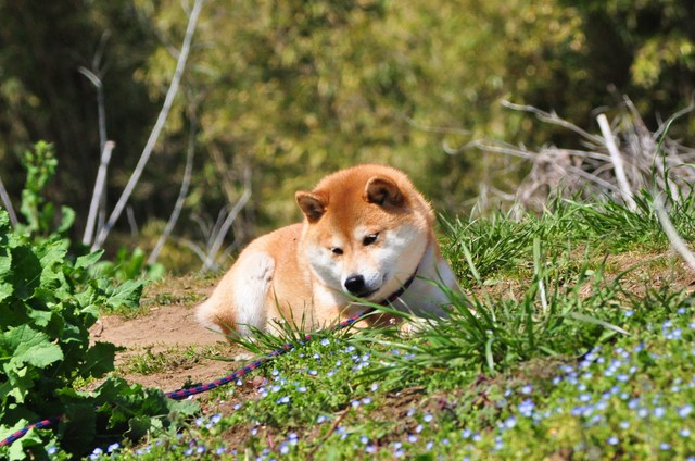 春の小川でかぼちゃんとふたり_a0126590_6573776.jpg