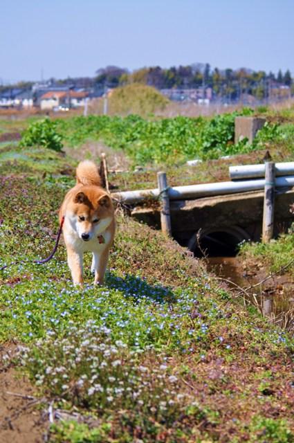 春の小川でかぼちゃんとふたり_a0126590_74259.jpg