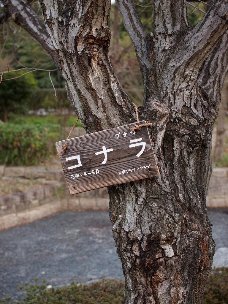 「鶴見緑地にて」_a0133692_23355864.jpg