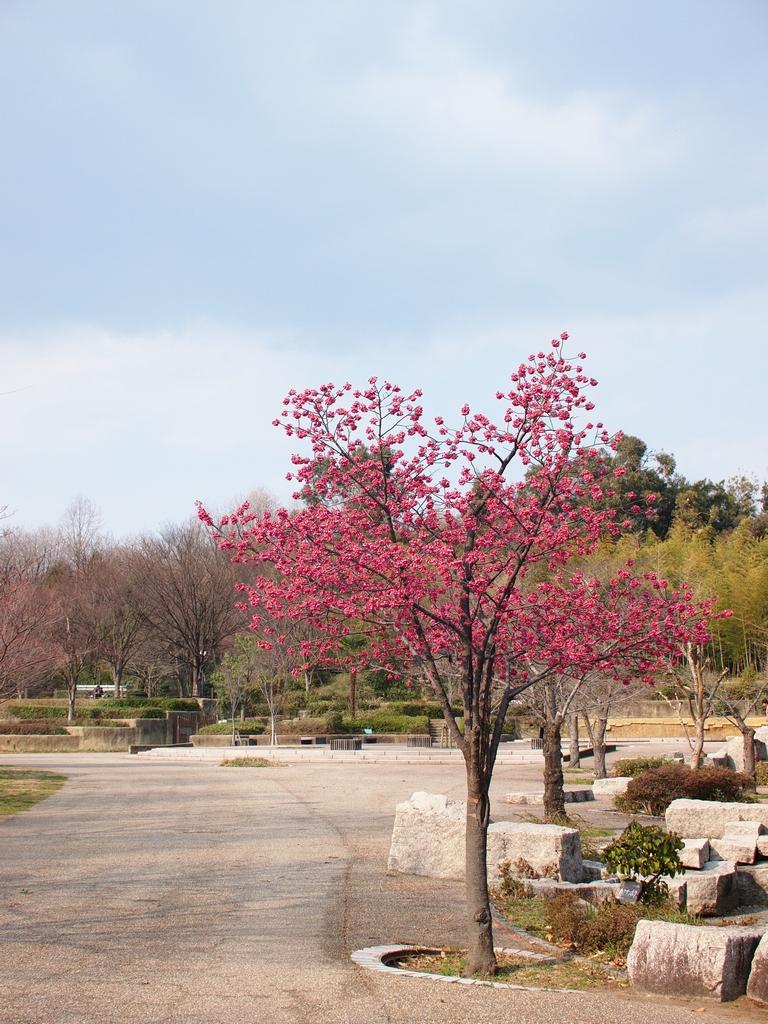 「鶴見緑地にて」_a0133692_23411712.jpg