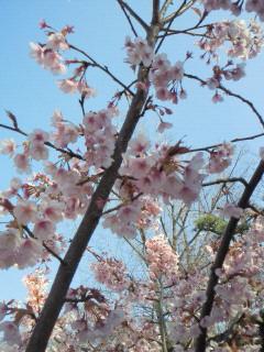 ラーメン桜_f0061797_22131054.jpg