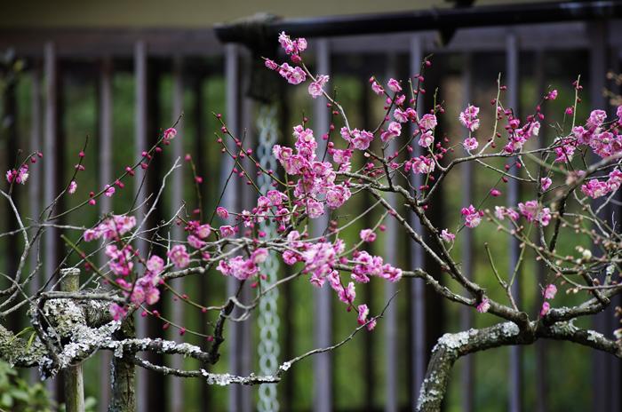 東慶寺の3月 4_b0151409_21575293.jpg
