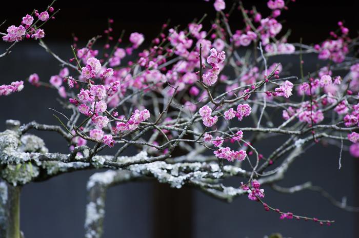 東慶寺の3月 4_b0151409_21591390.jpg