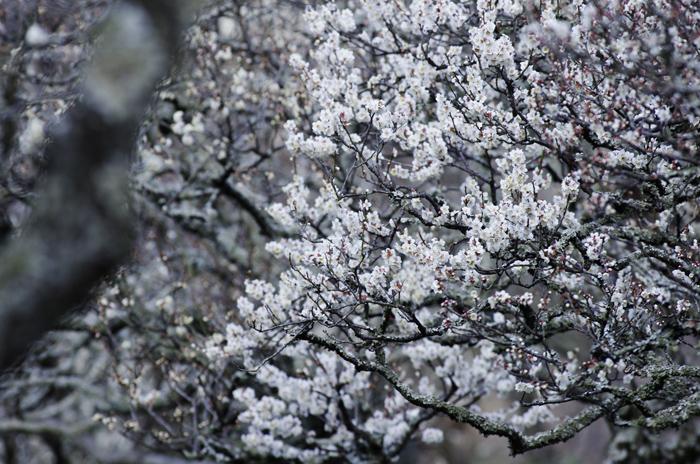 東慶寺の3月 4_b0151409_2204042.jpg
