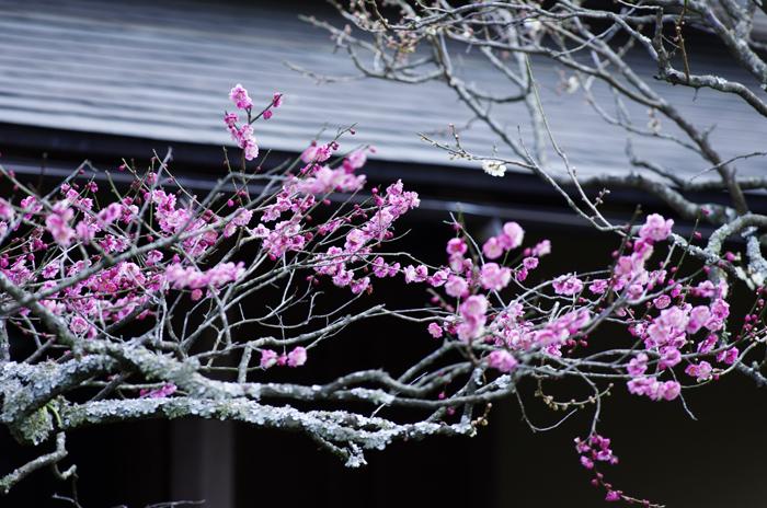 東慶寺の3月 4_b0151409_2213335.jpg