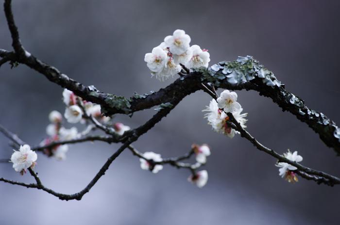 東慶寺の3月 4_b0151409_222164.jpg