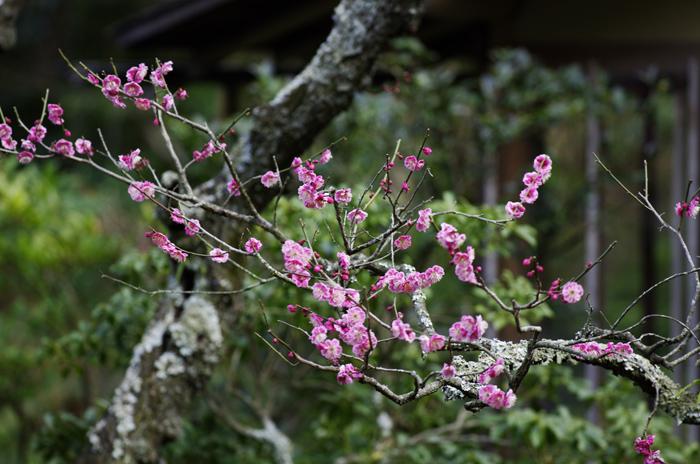 東慶寺の3月 4_b0151409_2222446.jpg