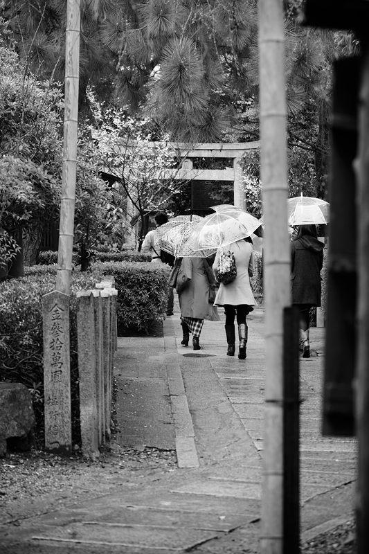 車折神社の河津桜 其の一_f0032011_1844611.jpg