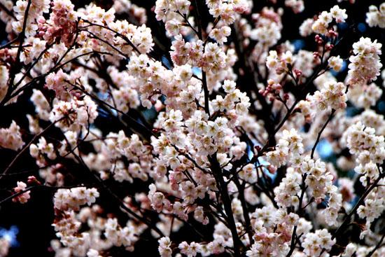 植物園2 花めぐり_e0048413_22123837.jpg