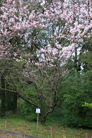 植物園2 花めぐり_e0048413_22125267.jpg