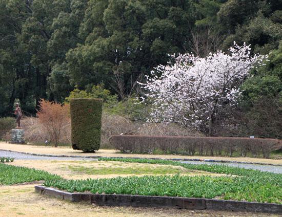植物園2 花めぐり_e0048413_2212876.jpg