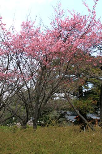 植物園2 花めぐり_e0048413_221326100.jpg