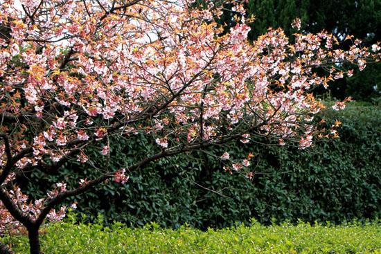植物園2 花めぐり_e0048413_22133891.jpg