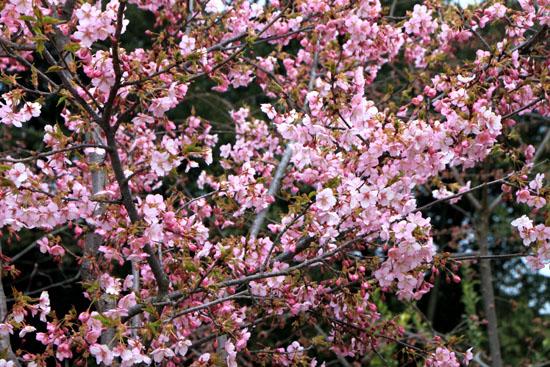 植物園2 花めぐり_e0048413_22134969.jpg