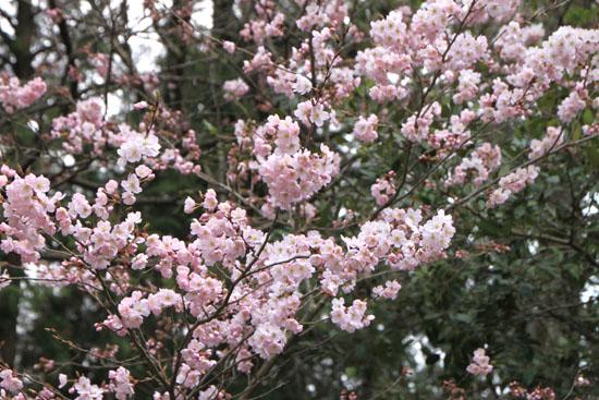 植物園2 花めぐり_e0048413_2213714.jpg
