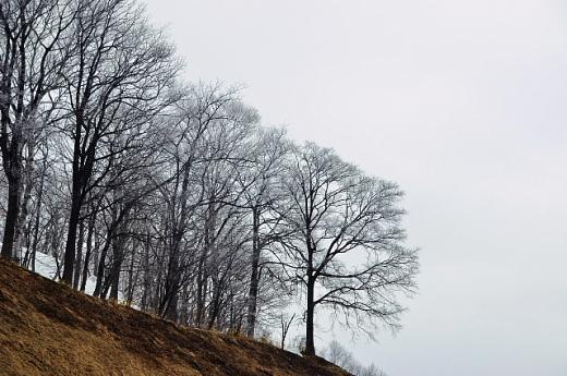 2012年3月29日(木):キンクロハジロ飛来[中標津町郷土館]_e0062415_17322293.jpg