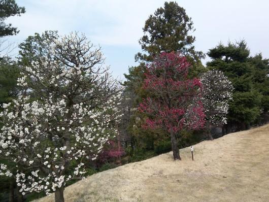 春が来た!_b0059026_9264658.jpg