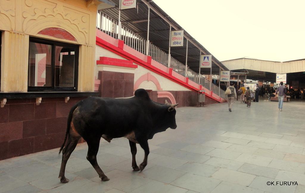 インド旅行記 23 列車でアグラへ_a0092659_23355289.jpg