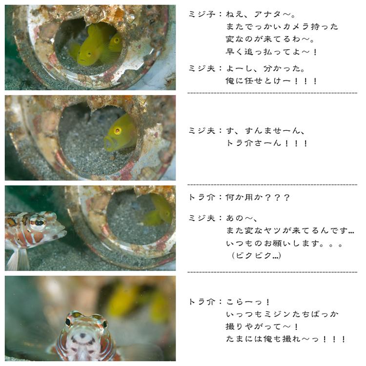 4コママンガ!?@須江・内浦ビーチ_e0158261_773378.jpg