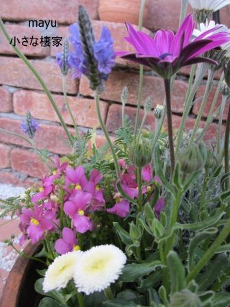 庭に届く春♪_a0243064_136346.jpg