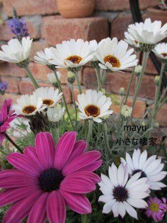 庭に届く春♪_a0243064_137012.jpg