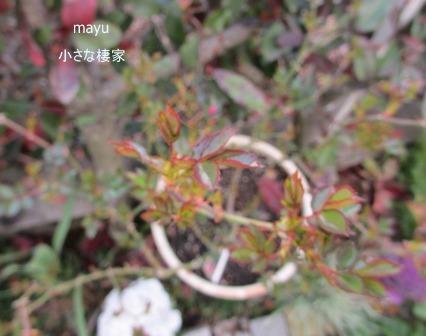 庭に届く春♪_a0243064_1385397.jpg