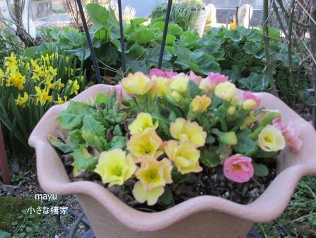 庭に届く春♪_a0243064_13931100.jpg