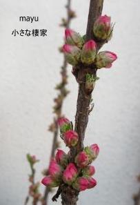 庭に届く春♪_a0243064_1401586.jpg