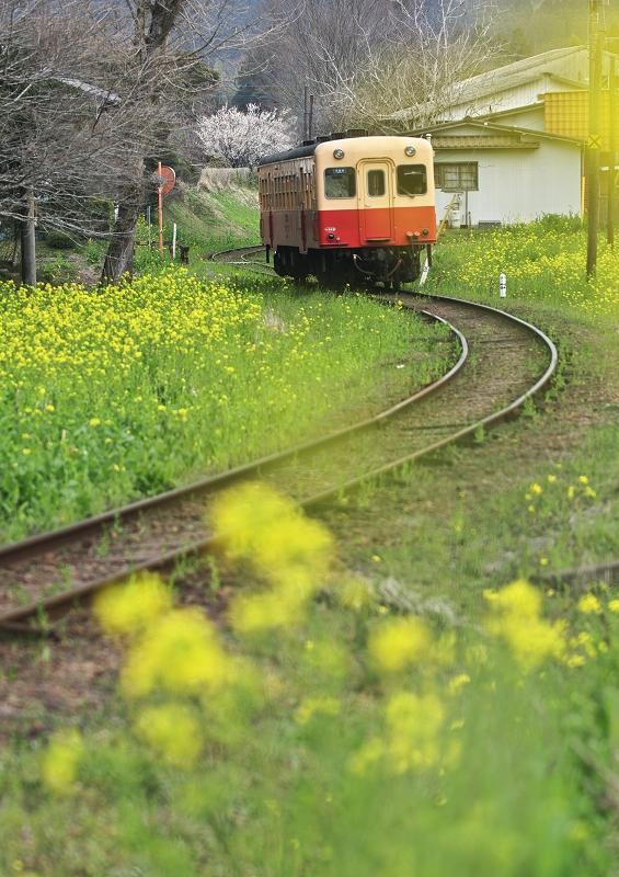 菜の花列車 1 ~仲春の小湊鐵道~_f0018464_21403444.jpg