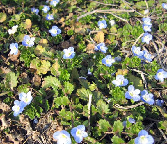 春るん♪_f0119369_1220678.jpg