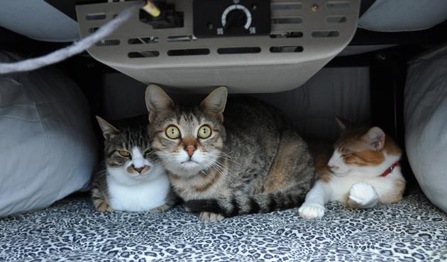 福島で猫シェルター取材中_e0171573_18355927.jpg