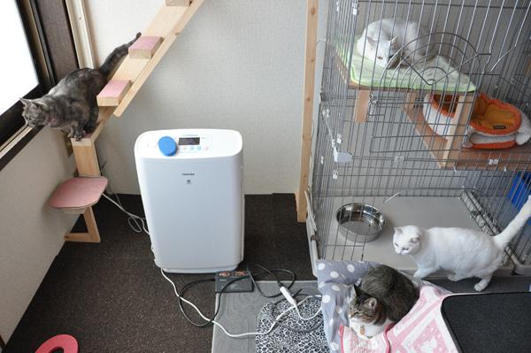 福島で猫シェルター取材中_e0171573_1836166.jpg